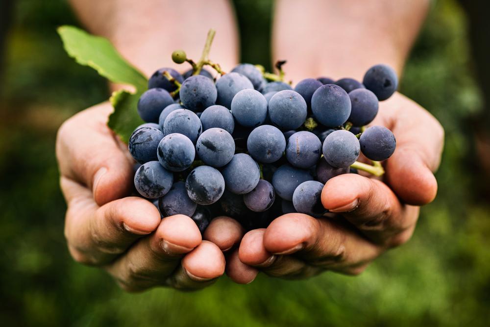 Lista de alimentos saudáveis: uvas